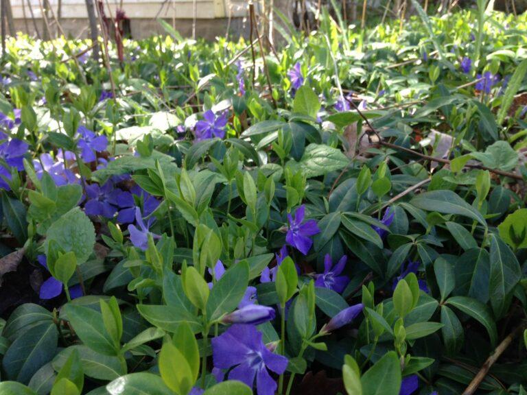 It's Invasive Species Week May 15-May 22